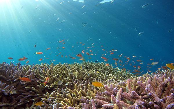 rong biển thường sống ở các rạn san hô